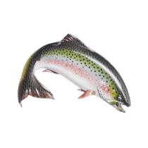 Compra Foam Mats Brushie Fish