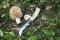 Plumier Couteau Tradition Champignon T8 Chêne & Etui Outdoor L Brun
